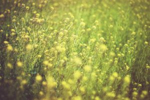 Top 10 tips for people with seasonal allergies