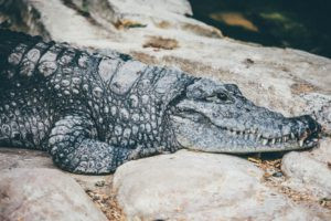 How to avoid the scaly crocodile look this winter