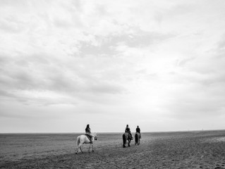 The white horses of Camargue (and one brown)