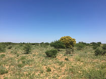 Eastport Ventures explores for nickel under desert sand with scattered acacia trees near Keng, Botswana.