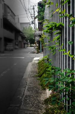 Japan (3 of 1)-2_web.jpg
