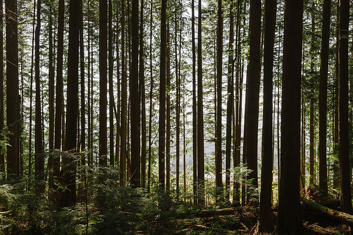 North_Vancouver_Forest-a.jpg