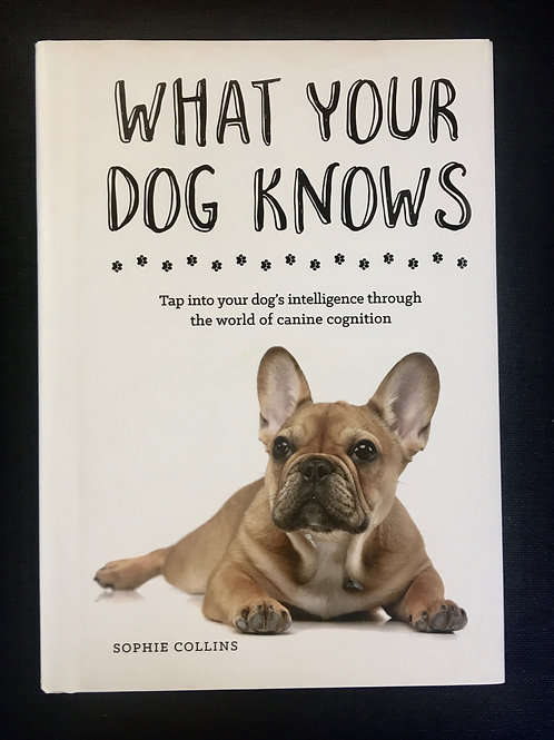 What your dog knows