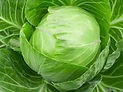 green cabbage.jpeg