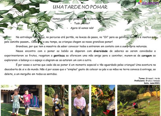Girassol Tarde - 05/05/2021
