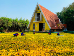 Foto com flores amarelas