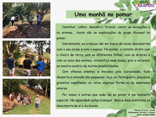 UMA MANHÃ NO POMAR_OV_MANHÃ_GIRASSOL.jpg