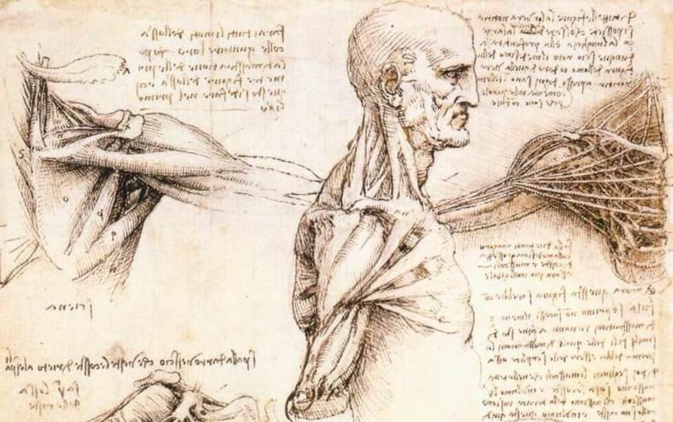 Anatomy drawings by Leonardo Da Vinci