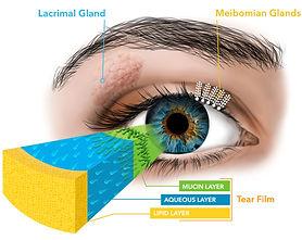 Tears eye-diagram.jpg