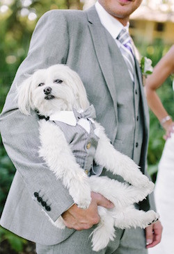 Dog wearing a tux