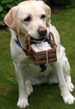 Doggie Ring Bearer