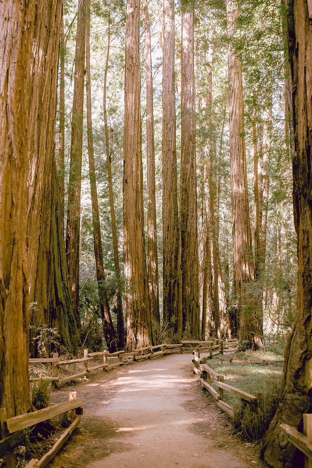 Muir Woods Engagement Session