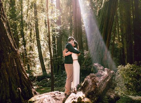 Adventurous Engagement Photos in Muir Woods | California Wedding Photographer