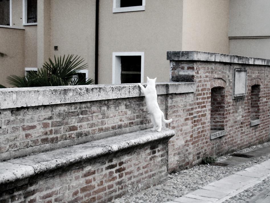 Candid_Peeping Kitty_b&w.jpg