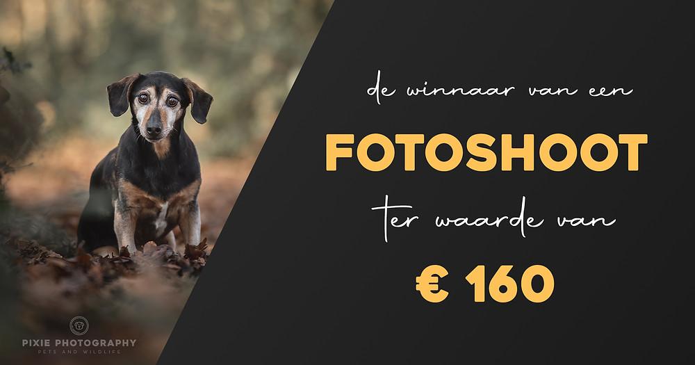 Advertentie fotoshoot met je hond