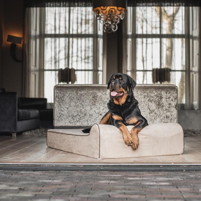Rottweiler op een hondenbed