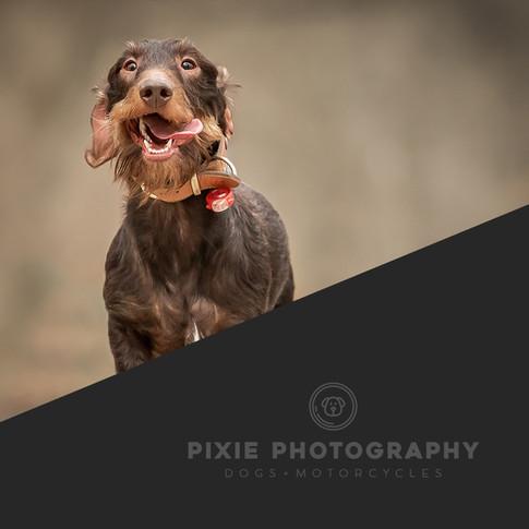 pixiefoto-1080x1080.jpg