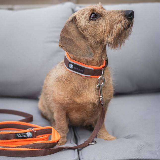 Ruwharige teckel met Anny-X hondenhalsband en lijn