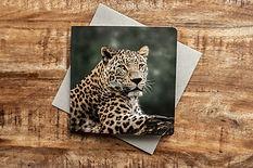 Wenskaart met foto van luipaard