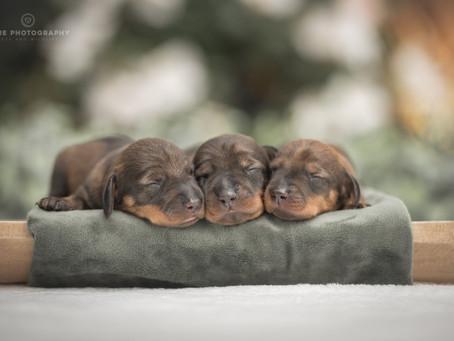 Een puppy in huis