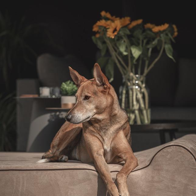 Hond op een hondenbed