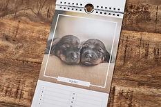 Kalender met foto's van pasgeboren puppy's