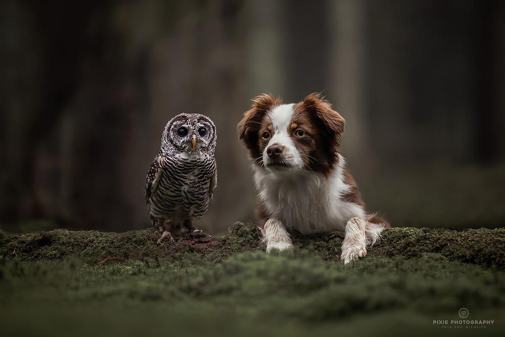 Uil en hond tussen het mos in het bos