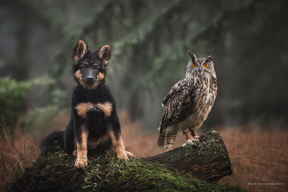 Hond en uil op een boomstam in het bos