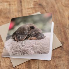 Luxe wenskaart met pasgeboren puppy's