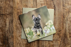 Wenskaart met foto van een Franse Bulldog
