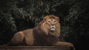 Landgoed Hoenderdaell en stichting leeuw