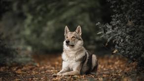 Hoe fotografeer ik mijn hond?