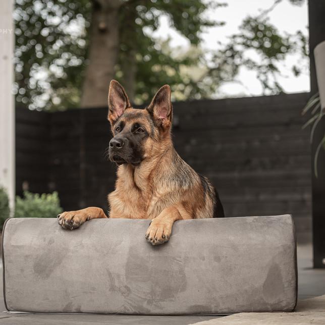 Herdershond op een hondenbed