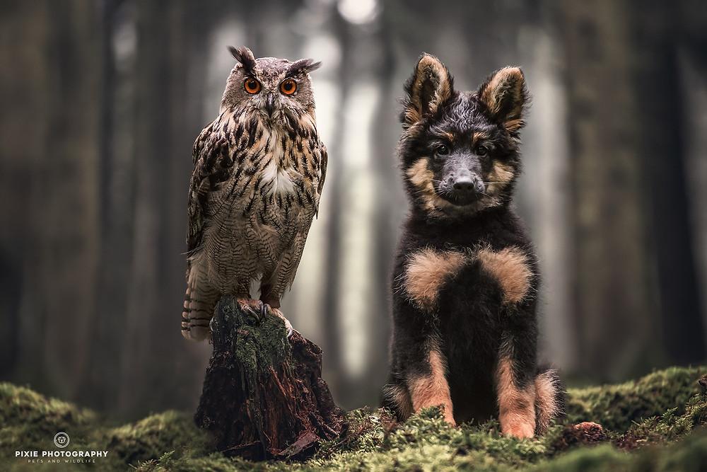 Uil en hond op een boomstam op het mos in het bos