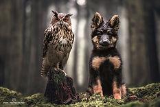 Een uil met een herdershon puppy in het bos
