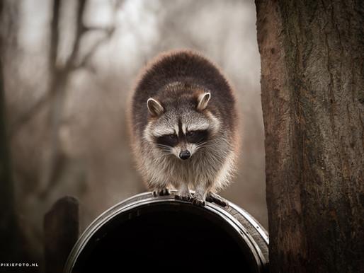 Wilde dieren fotograferen!