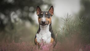 Waarom een hondenportret laten maken?