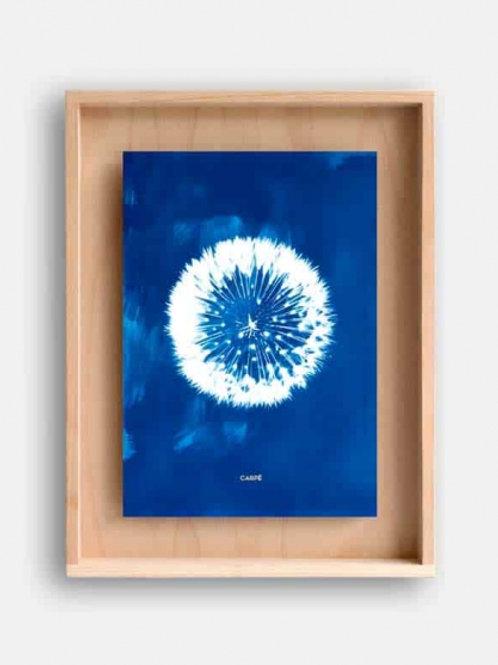 Cyanotype Carpë grand pissenlit