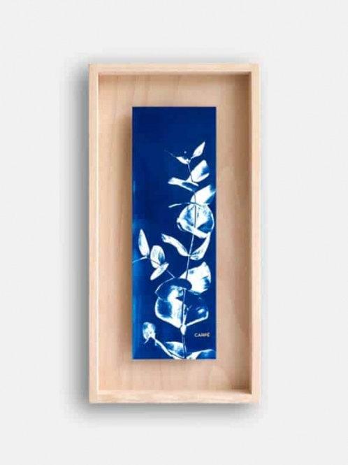 Cyanotype Carpë petit Eucalyptus