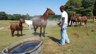 Kwame watering horses.JPG