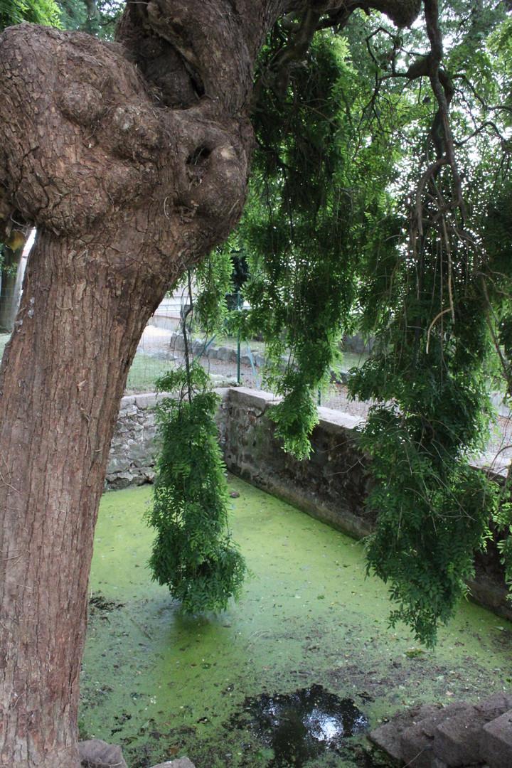 Le bassin extérieur