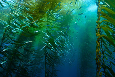 01-kelp-forest.adapt.1900.1.jpg