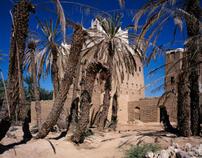 Yemen Palms.jpg
