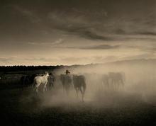 cowboy 7.jpg