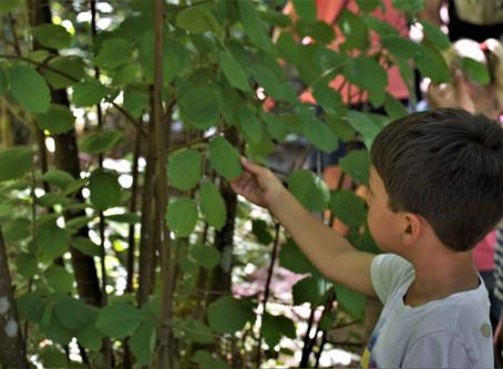 Board column: Tacoma Nature Walks program