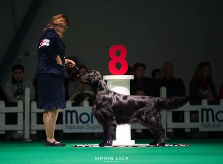 Matisse internationell champion Italiensk vinnare 2019