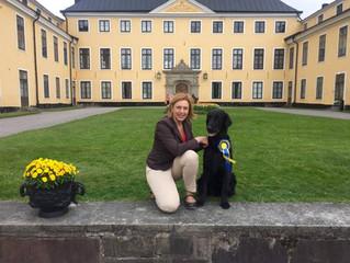 Matisse tog cert på SSRK Ulriksdal