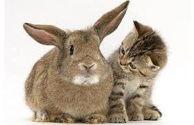 Distance Reiki: Bunny