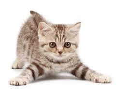 Distance Reiki: Cat