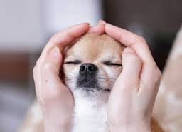 Distance Reiki: Dog